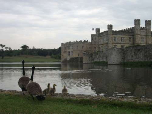 castle and geese England Day 3 Part 1: Leeds Castle
