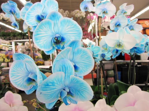 blue orchids L.A. Tour Day 1: Flower Market, Jewelry District, Chinatown