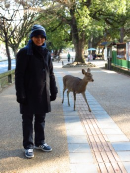 deer Todaiji Temple   Nara, Japan